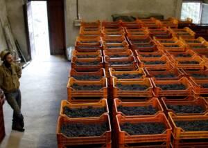 harvest of la perla di marco triacca