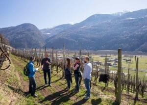 people visiting vineyard of la perla di marco triacca