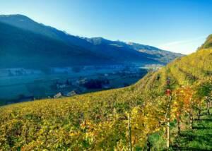 vineyards of la perla di marco triacca