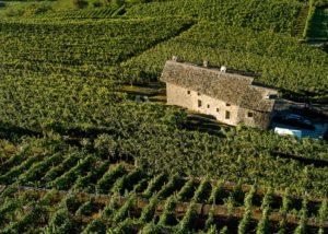 Vineyard of the La Perla Di Marco Triacca winery