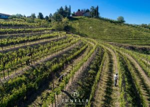 Vineyard of the la tunella winery