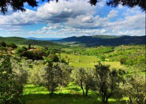 Trees near the vineyard at Le Fonti - Panzano winery