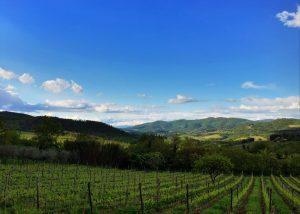 Vineyard of Le Fonti - Panzano winery