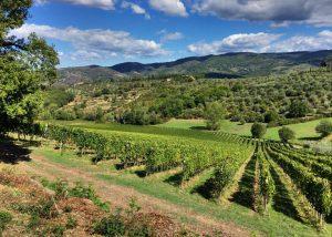 Beautiful view of the vineyard of Le Fonti - Panzano winery