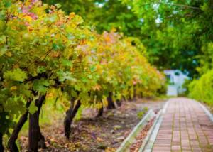 Paved road beside the vineyard of le manoir de brendel