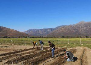 Staffs at Le manoir de brendel winery working in vineyard