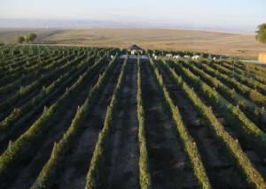Lindsay Creek Vineyards