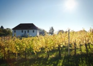 Building view from the vineyard of M-enostavno dobra vina winery