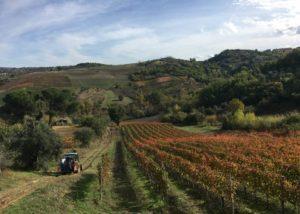 Vineyard of the mastroberardino winery