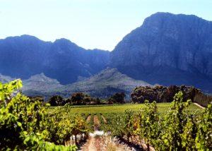 vineyard of mellasat vineyards