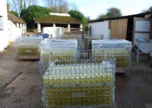Huge amount of wine bottles packed in steel crate.