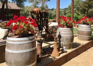 Garden of old creek ranch winery with some Wooden barrels used as a vase