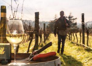 Wine tasting in the vineyard at Palliser Estate Wines winery