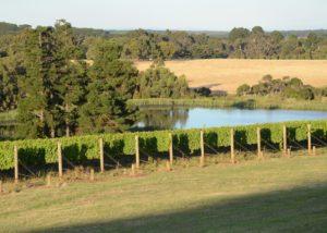 Vineyard of Paradigm Hill winery