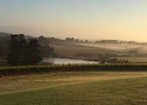 Vineyards at Paradigm Hill