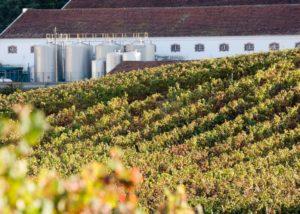 Vineyard of Quinta do Sanguinhal winery