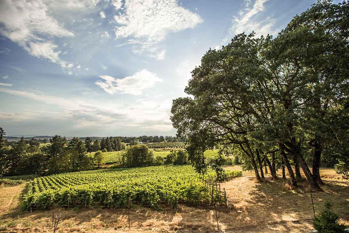 Vineyard of Roco winery