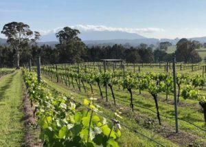 Vineyard of Rusty Fig Wines winery