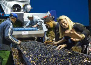 People working at Santomas Winery