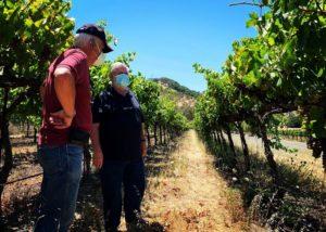 Vineyard of the Sunset cellars Winery