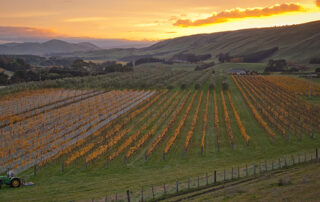 Beautiful vineyard of The Elder Pinot winery