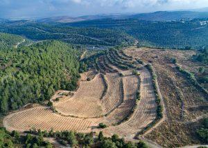 Beautiful vineyard view of the Tzora Vineyards winery