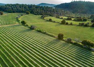 Tzora Vineyards- vineyards