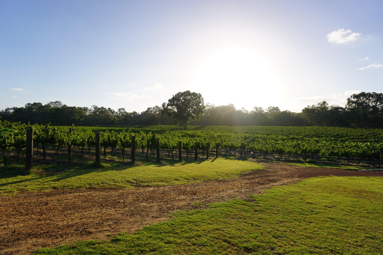Upper Reach-vineyard