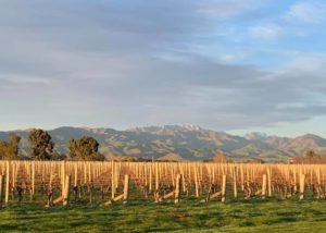 Vineyard of the Vicarage Lane Wines winery