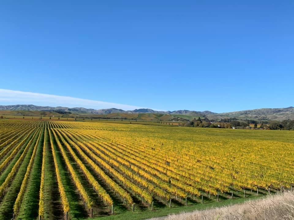 Beautiful vineyard of Vicarage Lane Wines winery