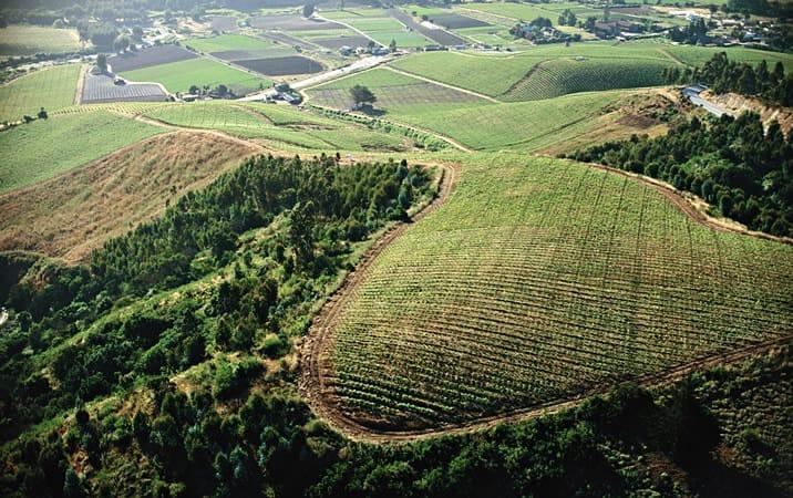 Magnificient vineyard view at Viña Casa Marin winery