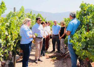 Vineyard tour at VIÑA RAVANAL winery