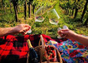 Wine tasting in the vineyard of Vinarija Jagunić winery