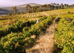Vineyards of Dragonridge