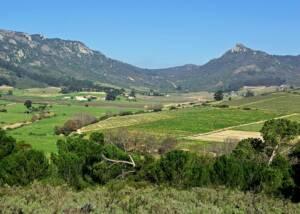 Dragonridge Vineyards