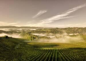 Vineyards at Vino Jarc