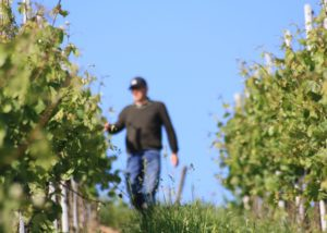 Owner of Weingut Nikolaus Köwerich in middle of rows of vines.