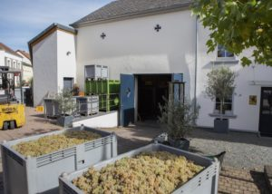harvest in front of the building of weingut peter lauer