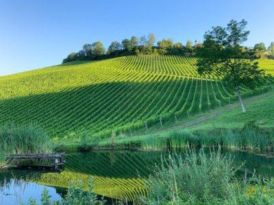 vineyard of the Weingut Tement
