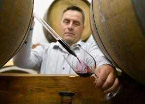 inspecting wines at zaloščan vina de adami winery
