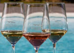 wine tasting at krolo winery