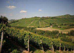 marco e vittorio slender rows of grapevines near amazing italian winery