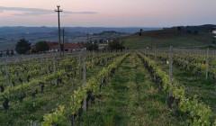 Vineyard Of Azienda Agricola Cascina Garitina Winery