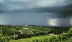 Vineyards Of Azienda Agricola Caudrina Winery