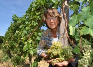 a man harvesting grapes at azienda agricola il poggio