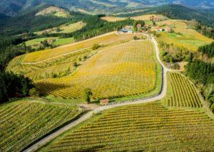 Bodega Berroja vineyard bird view in Spain