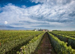 bodega caelum stunning vineyard with slender rows of grapevines