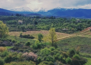aerial view of bodega encima wines