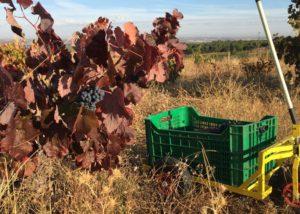 huge Bodega Negon vineyard located in Spain