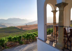 Bodega Ramos-Paul vineyard view from winery in Spain